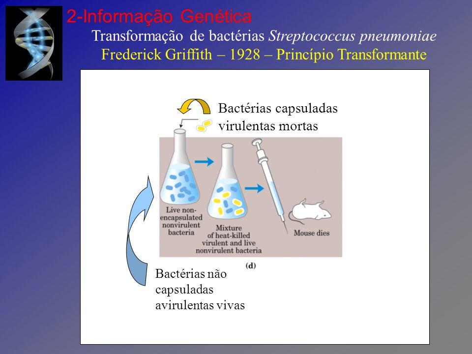 Transformação de bactérias Streptococcus pneumoniae Avery – MacLeod – McCarty - 1944 2-Informação Genética