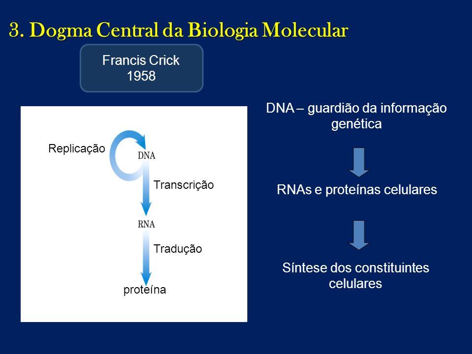 3. Dogma Central da Biologia Molecular DNA – guardião da informação genética RNAs e proteínas celulares Síntese dos constituintes celulares Replicação