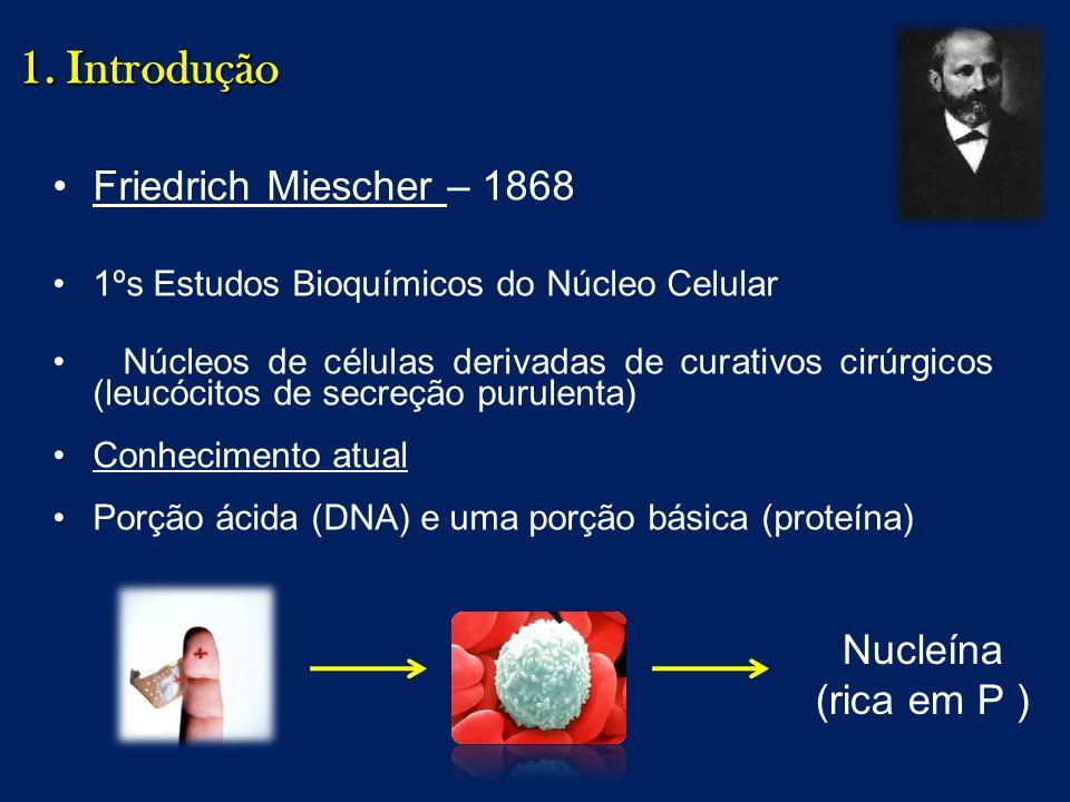 Friedrich Miescher – 1868 1ºs Estudos Bioquímicos do Núcleo Celular Núcleos de células derivadas de curativos cirúrgicos (leucócitos de secreção purul