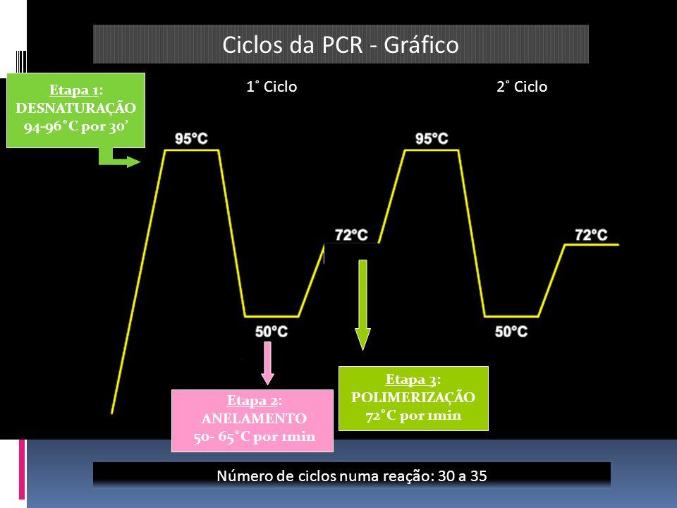 Etapa 1: DESNATURAÇÃO 94-96˚C por 30 Etapa 2: ANELAMENTO 50- 65˚C por 1min Etapa 3: POLIMERIZAÇÃO 72˚C por 1min 1˚ Ciclo2˚ Ciclo Número de ciclos numa