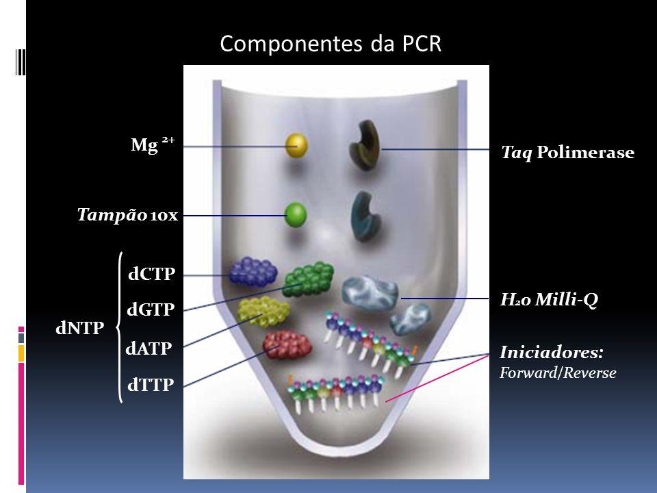 Componentes da PCR Iniciadores: Forward/Reverse Taq Polimerase Mg 2+ dCTP dGTP dATP dTTP dNTP Tampão 10x H 2 0 Milli-Q