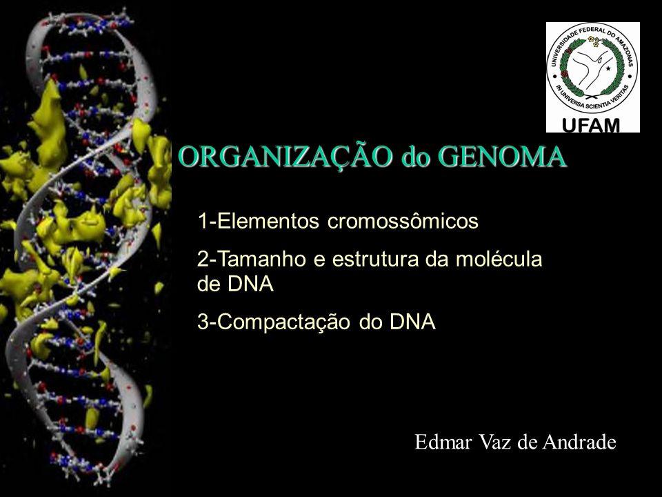 ORGANIZAÇÃO do GENOMA Edmar Vaz de Andrade 1-Elementos cromossômicos 2-Tamanho e estrutura da molécula de DNA 3-Compactação do DNA