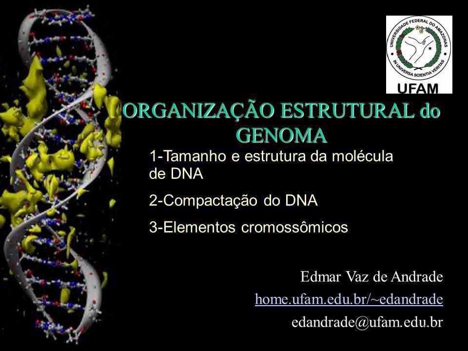 ORGANIZAÇÃO ESTRUTURAL do GENOMA Edmar Vaz de Andrade home.ufam.edu.br/~edandrade edandrade@ufam.edu.br 1-Tamanho e estrutura da molécula de DNA 2-Com