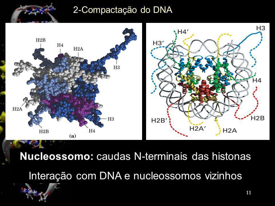 2-Compactação do DNA Nucleossomo: caudas N-terminais das histonas Interação com DNA e nucleossomos vizinhos 11