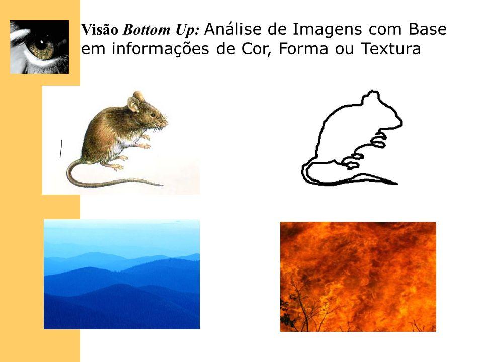 Visão Bottom Up: Análise de Imagens com Base em informações de Cor, Forma ou Textura