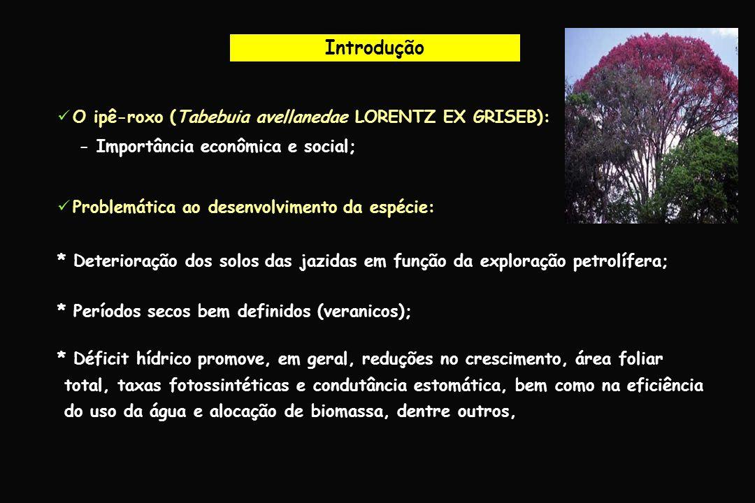 Agradecimentos Universidade Federal Rural da Amazônia
