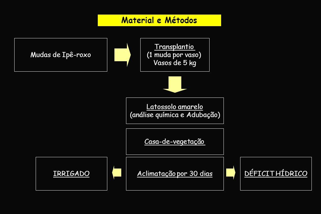 Material e Métodos Mudas de Ipê-roxo Transplantio (1 muda por vaso) Vasos de 5 kg Latossolo amarelo (análise química e Adubação) Aclimatação por 30 di