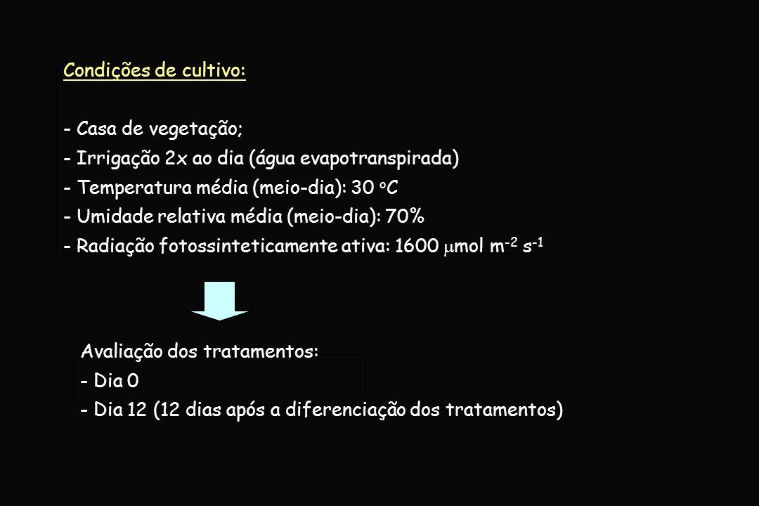 Variáveis fisiológicas: - Conteúdo relativo de água (%); - Trocas gasosas (Porômetro: mod.