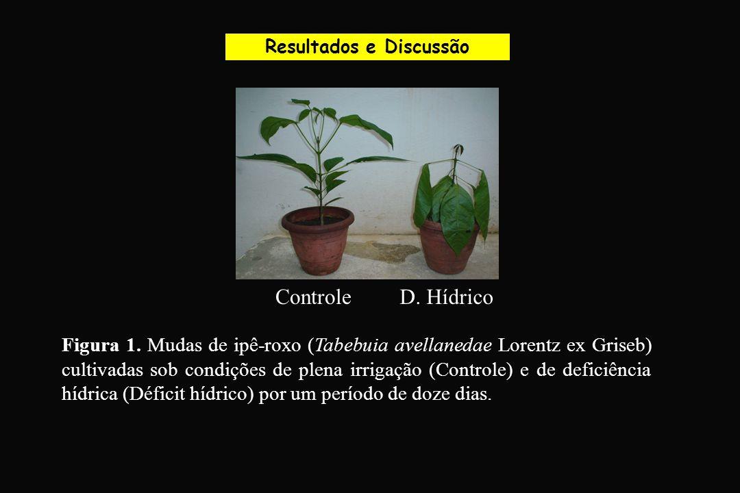 Resultados e Discussão Figura 1. Mudas de ipê-roxo (Tabebuia avellanedae Lorentz ex Griseb) cultivadas sob condições de plena irrigação (Controle) e d