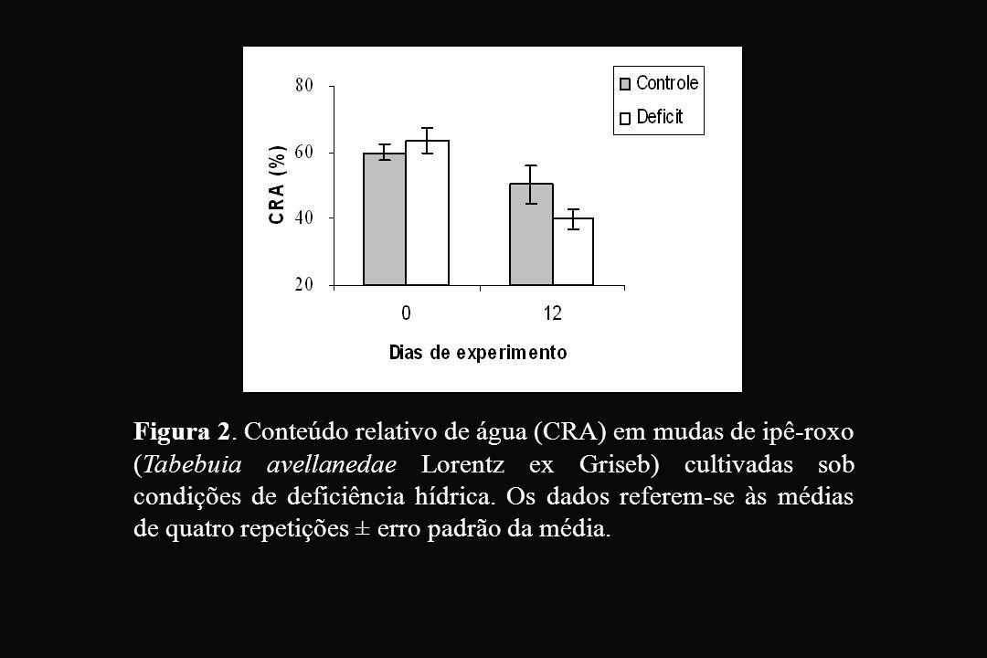 Figura 2. Conteúdo relativo de água (CRA) em mudas de ipê-roxo (Tabebuia avellanedae Lorentz ex Griseb) cultivadas sob condições de deficiência hídric