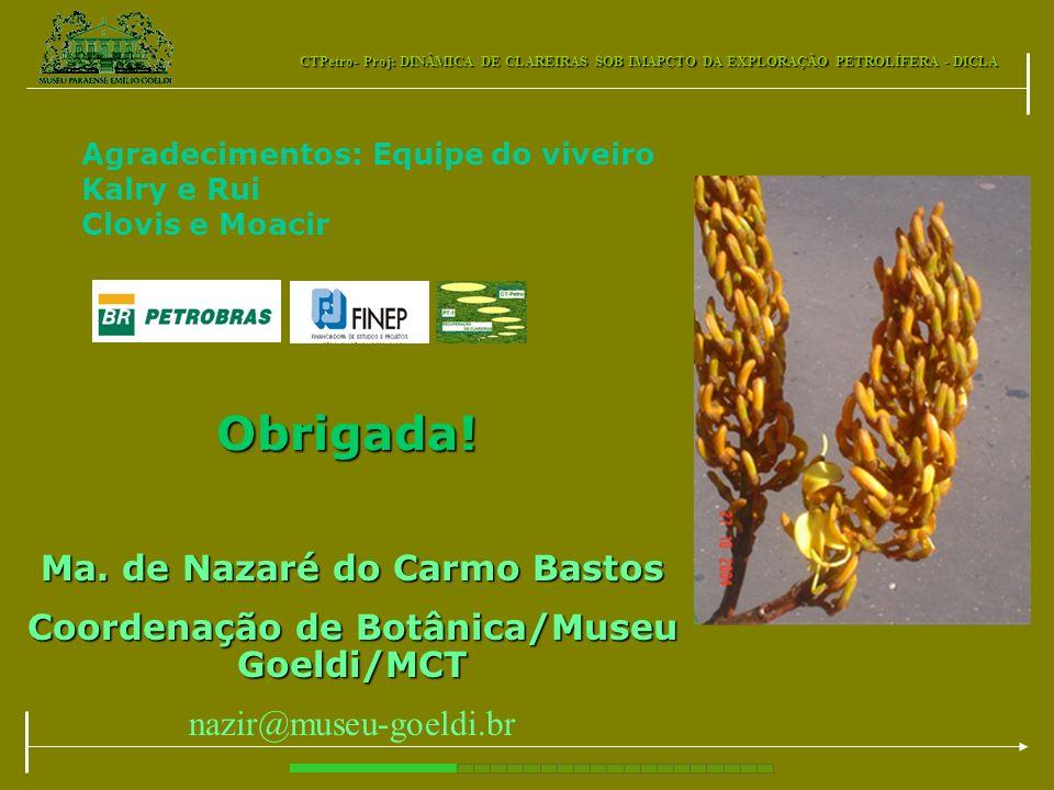 CTPetro- Proj: DINÂMICA DE CLAREIRAS SOB IMAPCTO DA EXPLORAÇÃO PETROLÍFERA - DICLA Obrigada! Ma. de Nazaré do Carmo Bastos Coordenação de Botânica/Mus