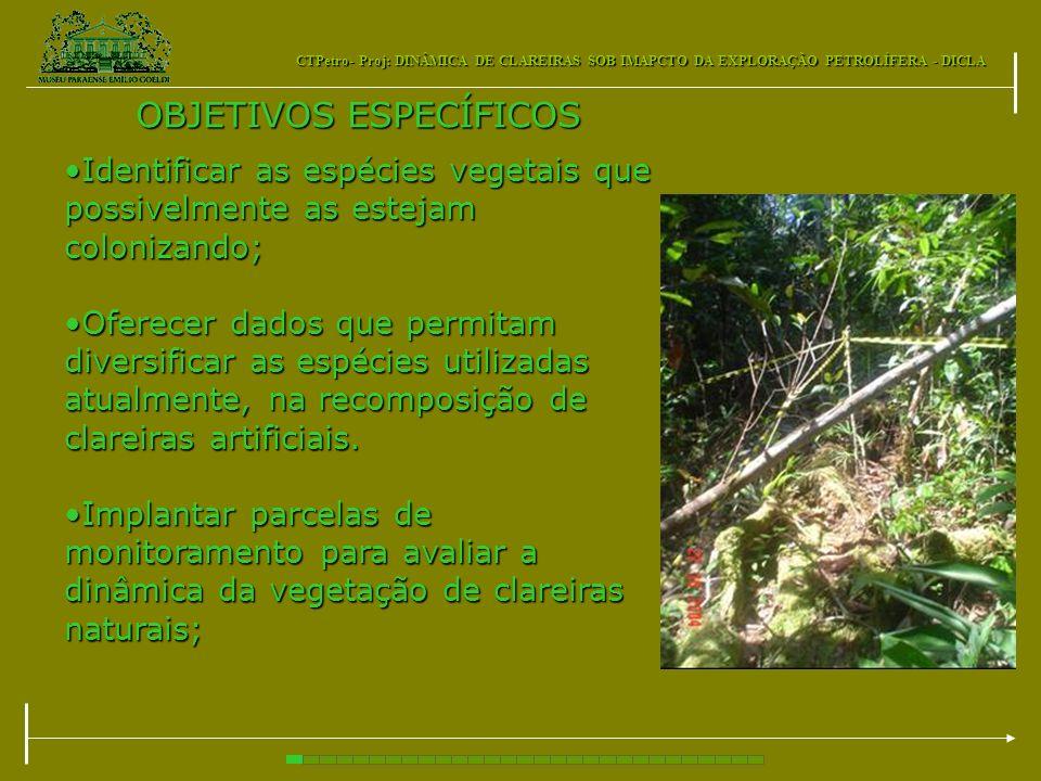 CTPetro- Proj: DINÂMICA DE CLAREIRAS SOB IMAPCTO DA EXPLORAÇÃO PETROLÍFERA - DICLA OBJETIVOS ESPECÍFICOS Identificar as espécies vegetais que possivel