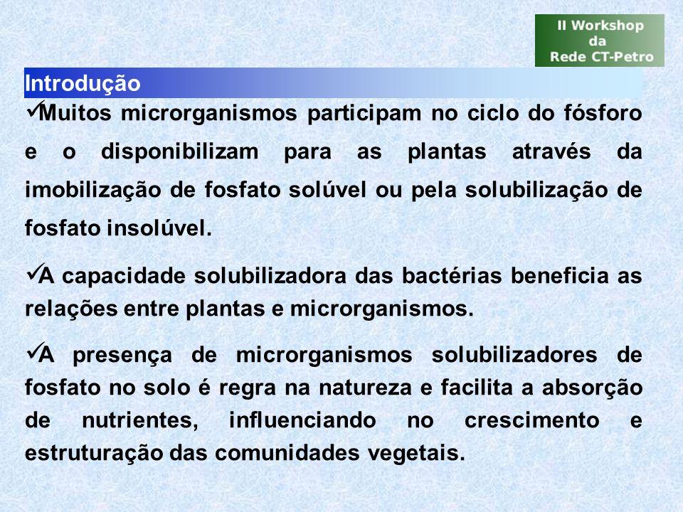 Introdução Muitos microrganismos participam no ciclo do fósforo e o disponibilizam para as plantas através da imobilização de fosfato solúvel ou pela