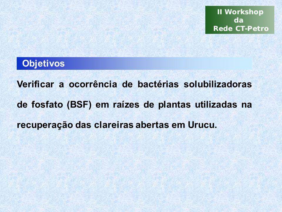 Objetivos Verificar a ocorrência de bactérias solubilizadoras de fosfato (BSF) em raízes de plantas utilizadas na recuperação das clareiras abertas em