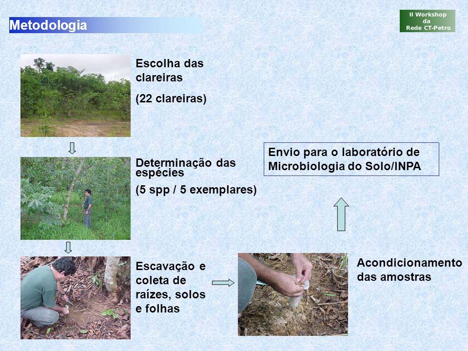 Metodologia Escolha das clareiras (22 clareiras) Determinação das espécies (5 spp / 5 exemplares) Escavação e coleta de raízes, solos e folhas Acondic