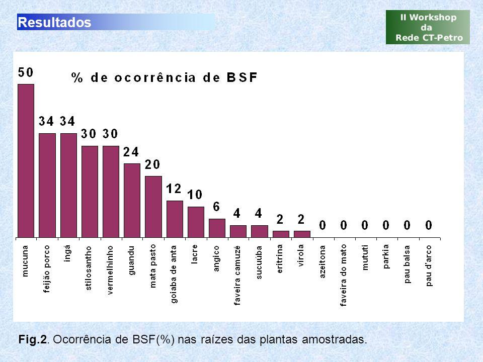 Conclusões A ocorrência de BSF variou entre 2 a 50% das raízes As leguminosas apresentaram maior ocorrência do que as espécies não leguminosas.