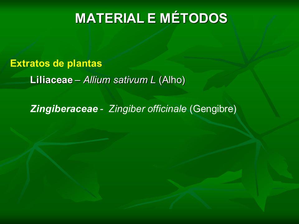MATERIAL E MÉTODOS Extratos de plantas Liliaceae – Allium sativum L (Alho) Zingiberaceae - Zingiber officinale (Gengibre)