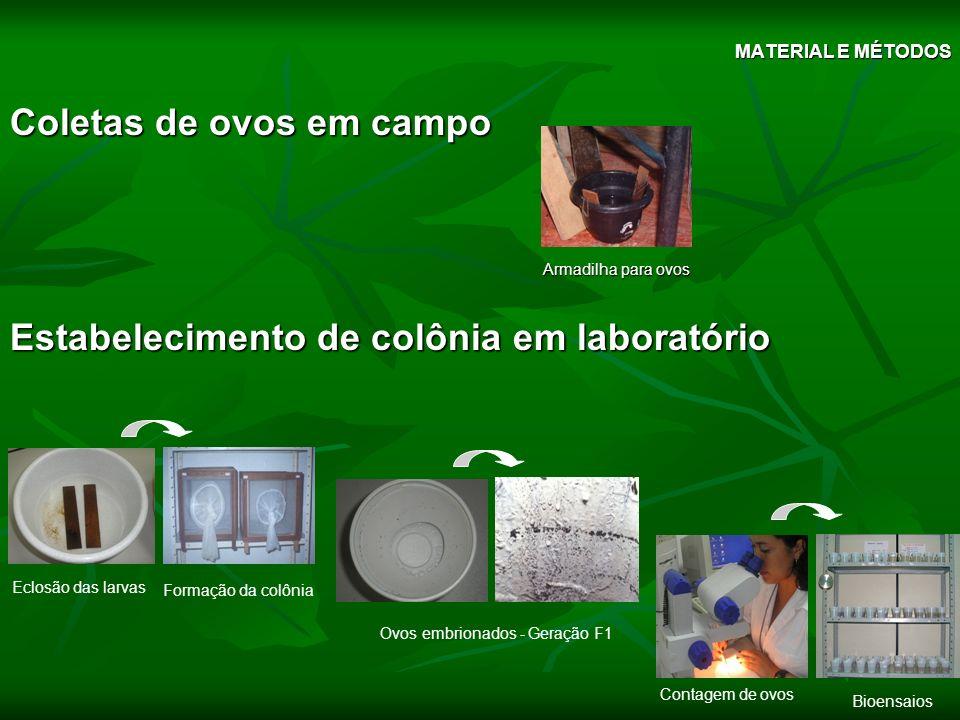 Coletas de ovos em campo Estabelecimento de colônia em laboratório Armadilha para ovos Eclosão das larvas Formação da colônia Ovos embrionados - Geraç