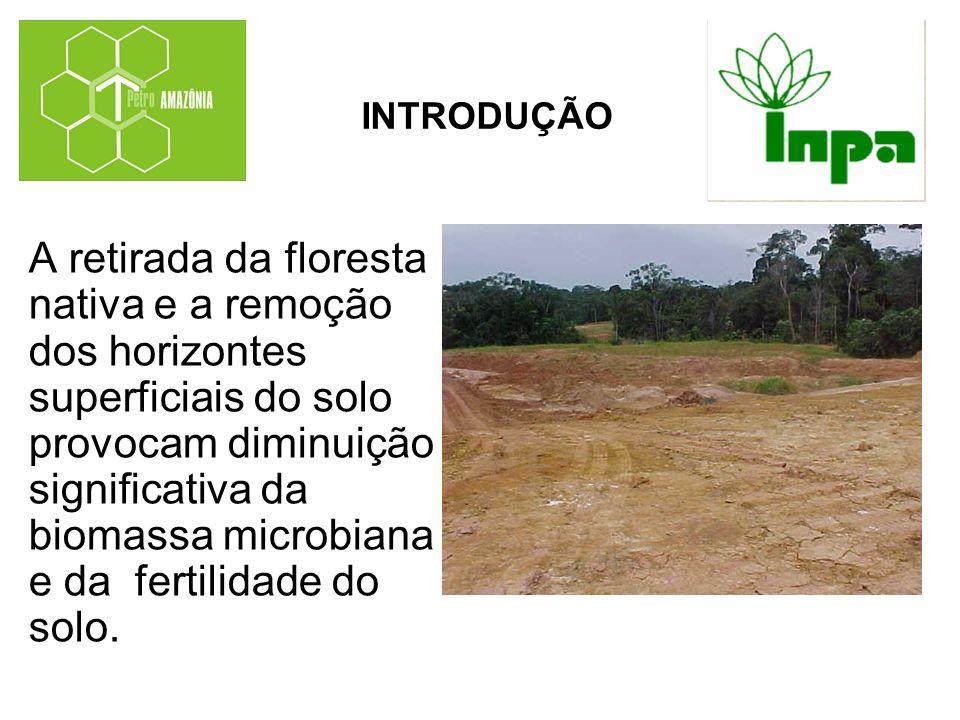 A retirada da floresta nativa e a remoção dos horizontes superficiais do solo provocam diminuição significativa da biomassa microbiana e da fertilidad