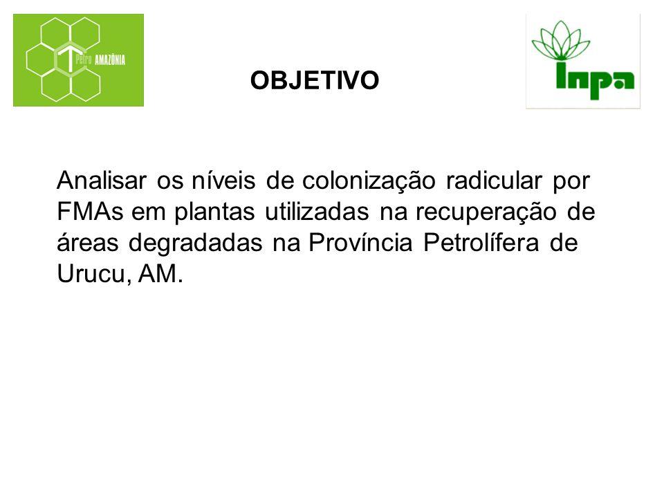OBJETIVO Analisar os níveis de colonização radicular por FMAs em plantas utilizadas na recuperação de áreas degradadas na Província Petrolífera de Uru