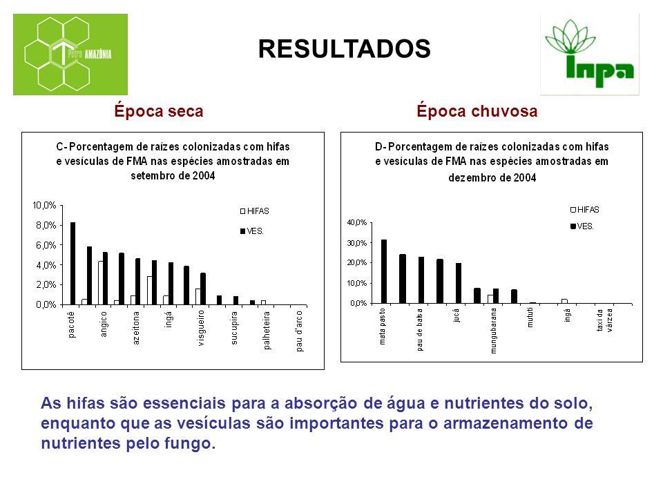 CONCLUSÕES Na época de seca (setembro) houve uma maior distribuição de hifas nas raízes em um número maior de espécies (13 spp) do que no período chuvoso (dezembro, 10 spp).