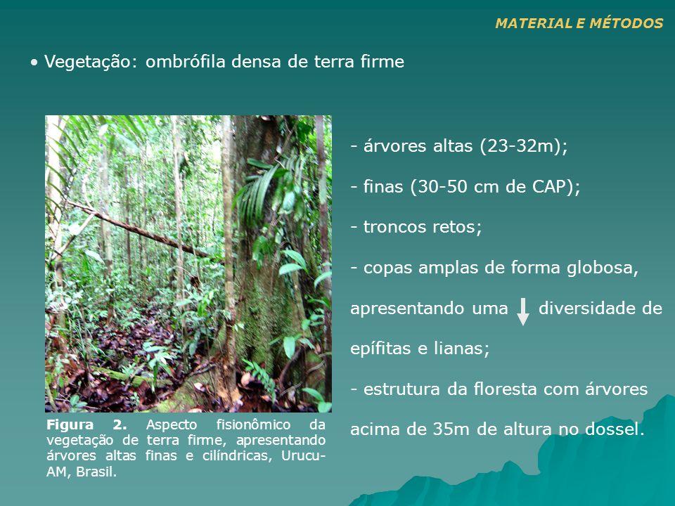 - árvores altas (23-32m); - finas (30-50 cm de CAP); - troncos retos; - copas amplas de forma globosa, apresentando uma diversidade de epífitas e lian