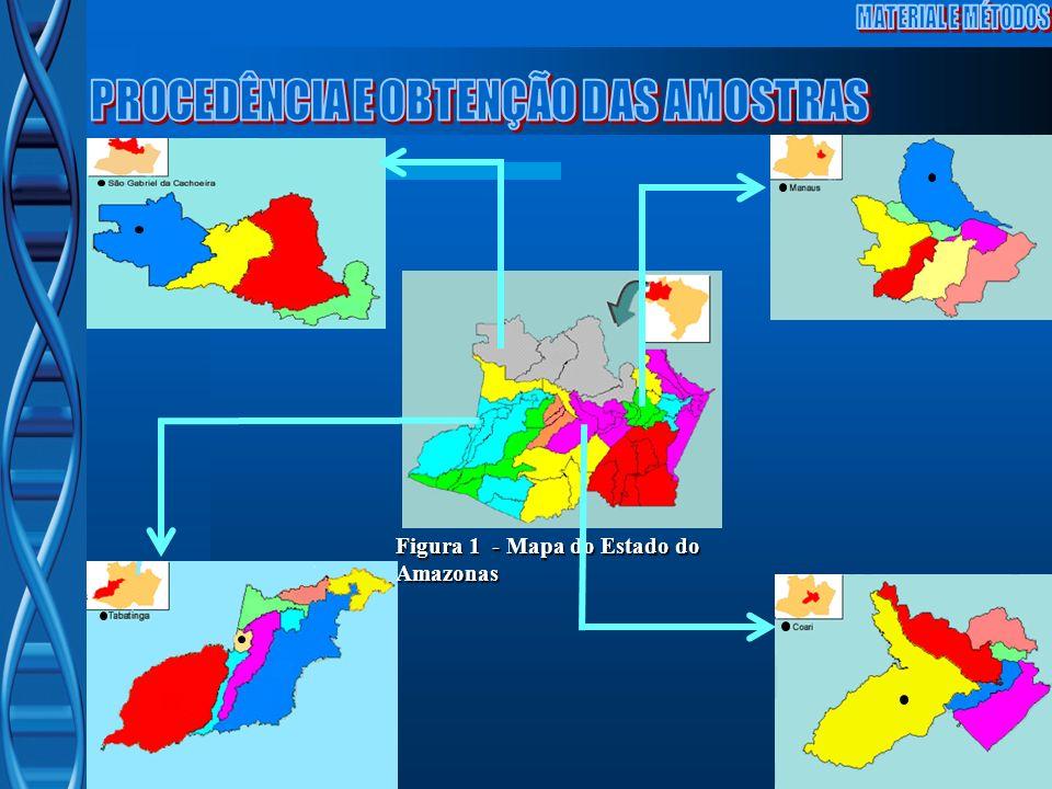 Figura 1 - Mapa do Estado do Amazonas