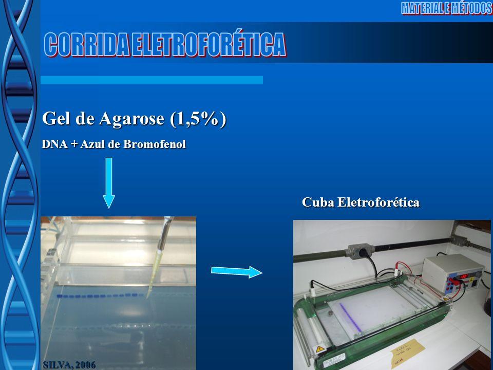 SILVA, 2006 Gel de Agarose (1,5%) DNA + Azul de Bromofenol Cuba Eletroforética
