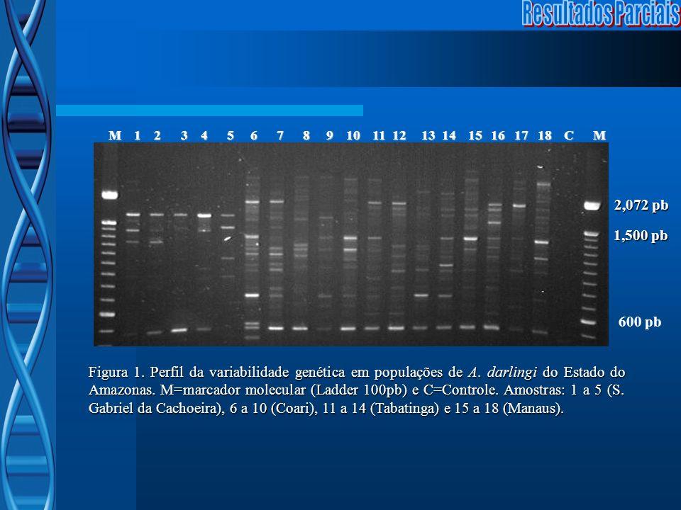 2,072 pb 1,500 pb 600 pb Figura 1. Perfil da variabilidade genética em populações de A. darlingi do Estado do Amazonas. M=marcador molecular (Ladder 1