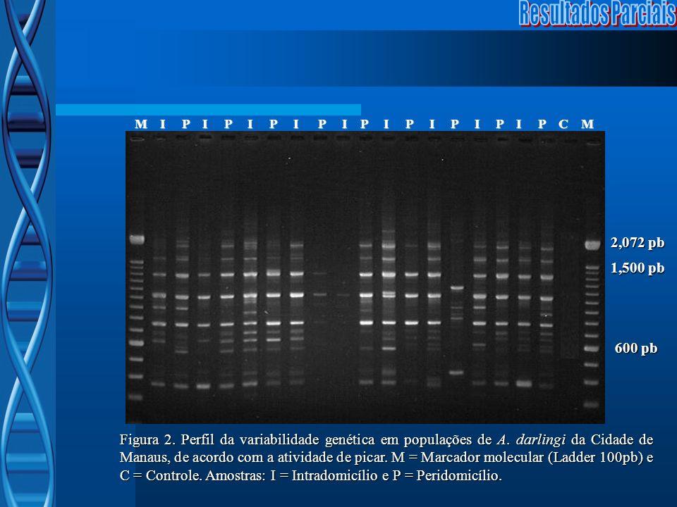 M I P I P I P I P I P I P I P I P I P C M M I P I P I P I P I P I P I P I P I P C M Figura 2. Perfil da variabilidade genética em populações de A. dar
