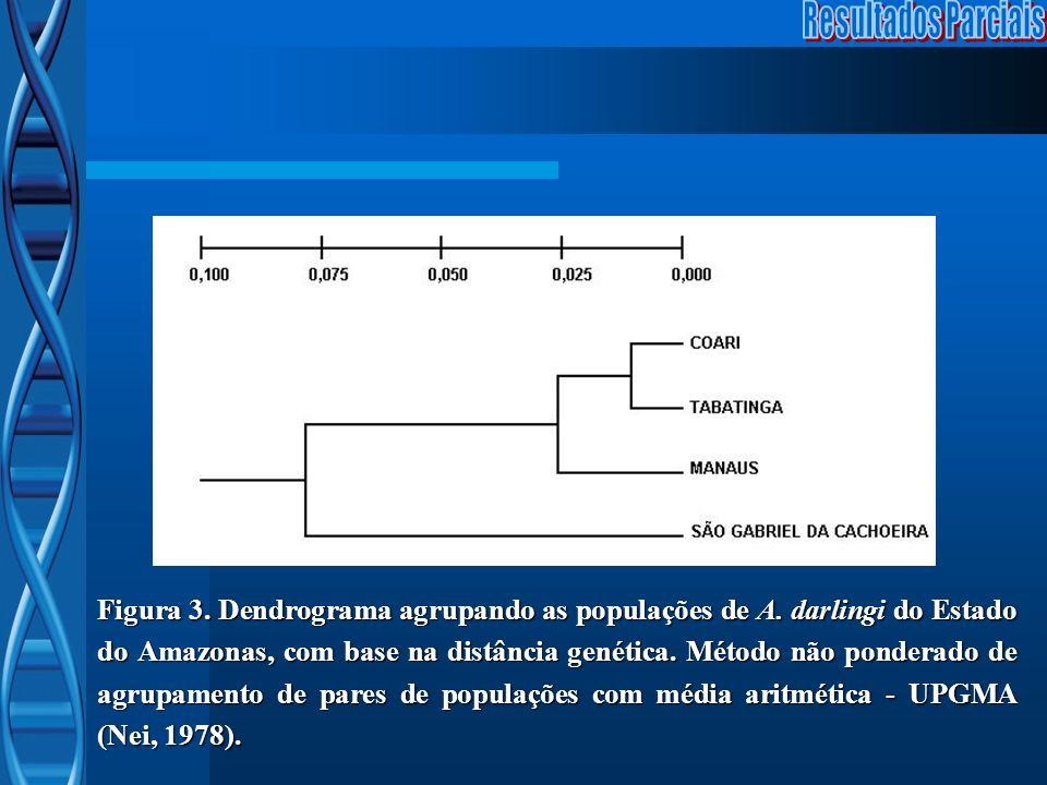 Figura 3. Dendrograma agrupando as populações de A. darlingi do Estado do Amazonas, com base na distância genética. Método não ponderado de agrupament