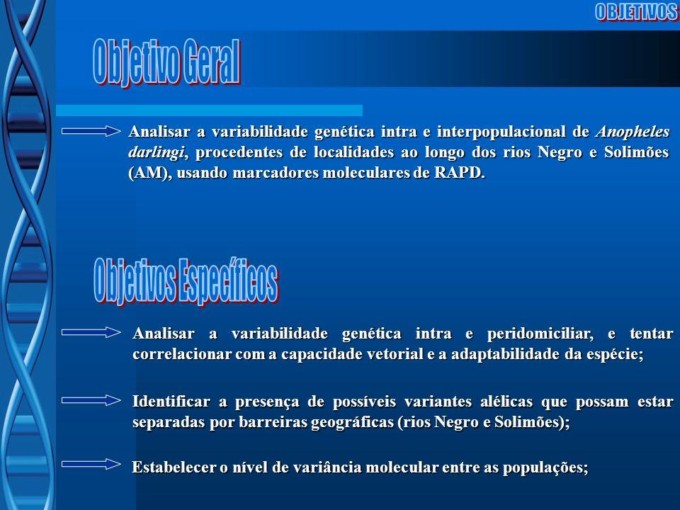 Analisar a variabilidade genética intra e interpopulacional de Anopheles darlingi, procedentes de localidades ao longo dos rios Negro e Solimões (AM),