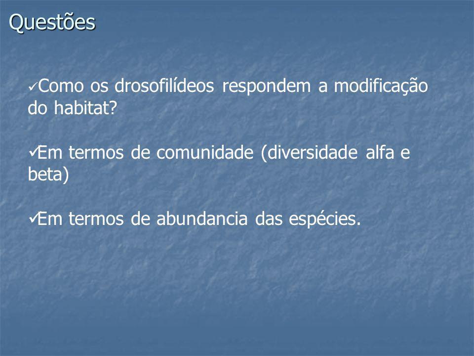 Questões Como os drosofilídeos respondem a modificação do habitat? Em termos de comunidade (diversidade alfa e beta) Em termos de abundancia das espéc