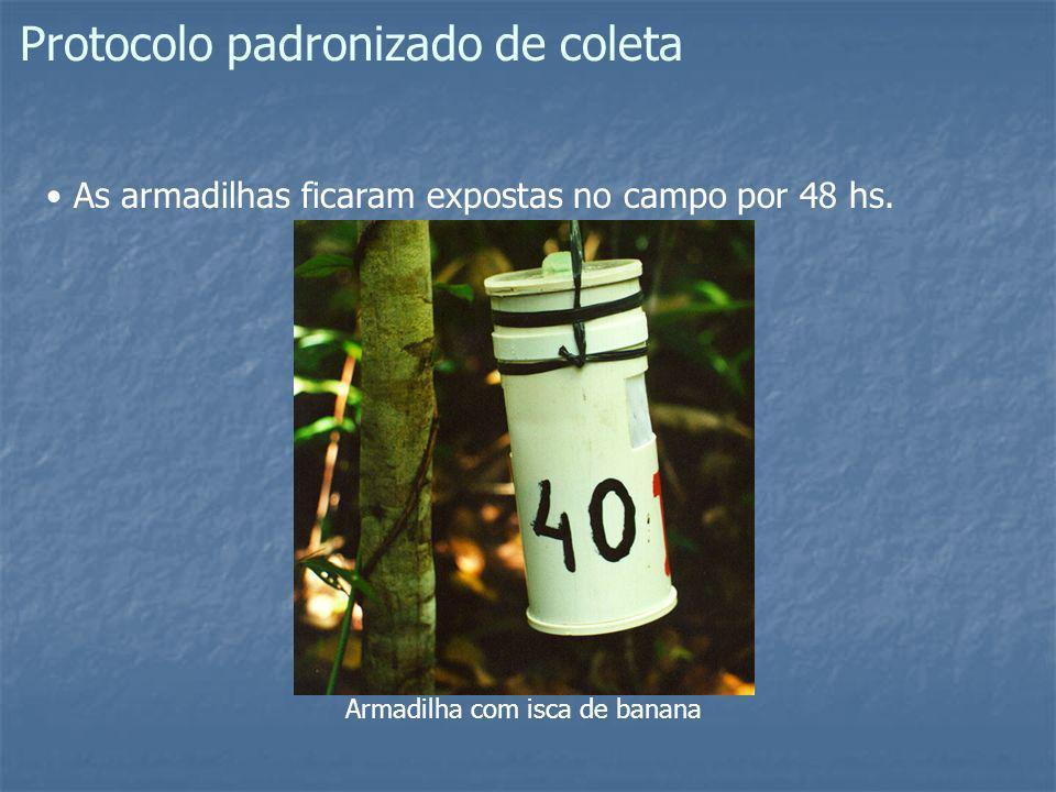 Protocolo padronizado de coleta As armadilhas ficaram expostas no campo por 48 hs. Armadilha com isca de banana