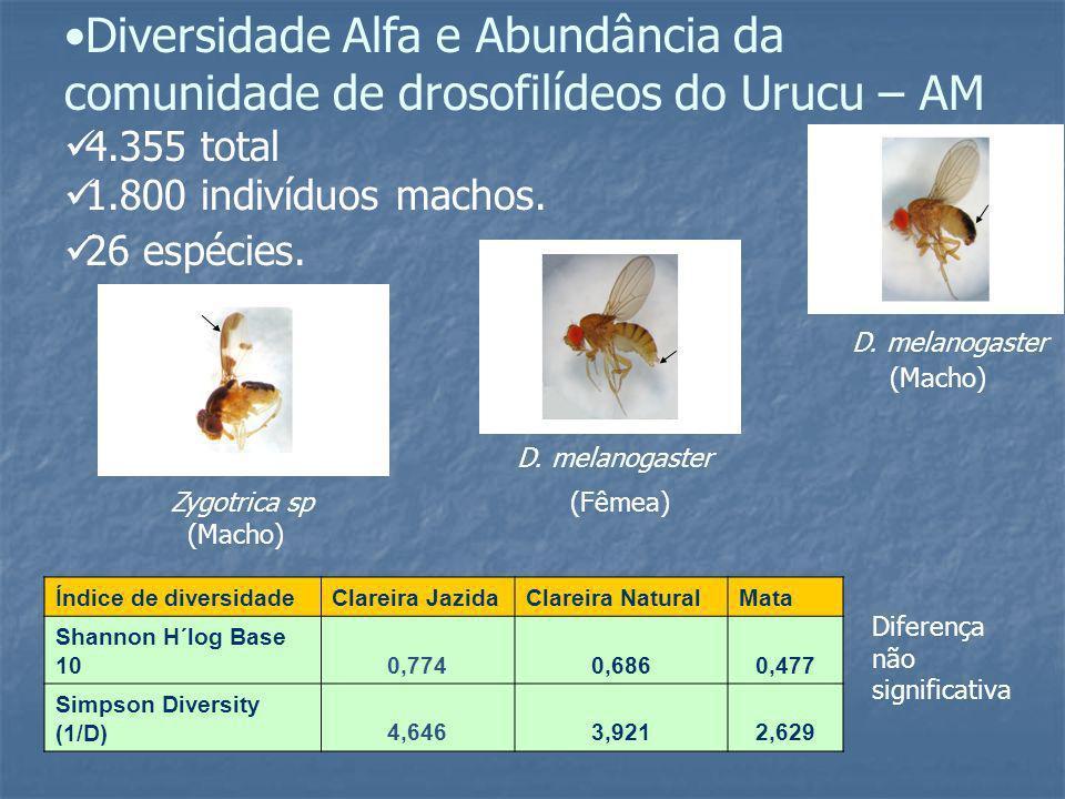 Diversidade Alfa e Abundância da comunidade de drosofilídeos do Urucu – AM 4.355 total 1.800 indivíduos machos. 26 espécies. D. melanogaster Zygotrica