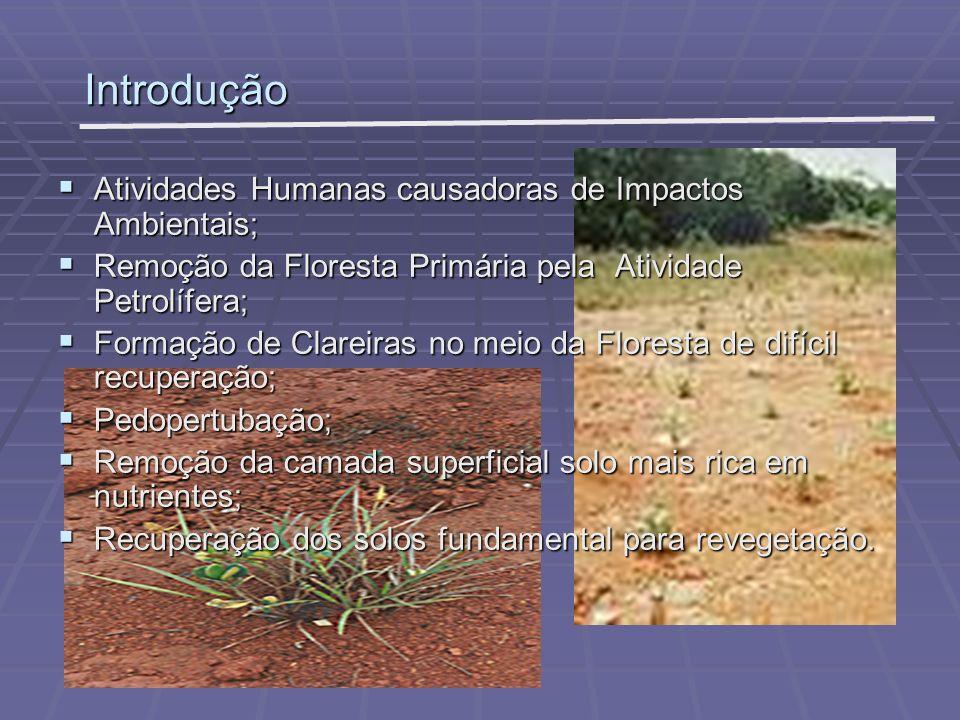 Área de Estudo Base de exploração petrolífera Geólogo: Base de exploração petrolífera Geólogo: Pedro de Moura Município de Coari na bacia do Rio Urucu Estado do Amazonas Estado do Amazonas Experimento Localizado na clareira 21 Experimento Localizado na clareira 21 Demais áreas de Floresta Primária localizados: Demais áreas de Floresta Primária localizados: Área Adjacente ao Experimento (Floresta I) Área Adjacente ao Experimento (Floresta I) Porto Hélio (Floresta II) Porto Hélio (Floresta II) Porto Evandro(Floresta III) Porto Evandro(Floresta III) LUC 06 (Floresta IV) LUC 06 (Floresta IV)