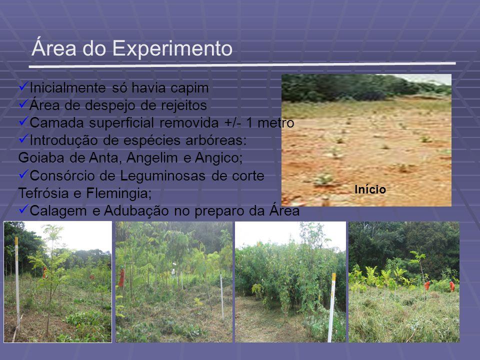 Área do Experimento Início Inicialmente só havia capim Área de despejo de rejeitos Camada superficial removida +/- 1 metro Introdução de espécies arbó