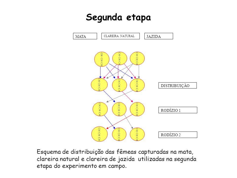 Segunda etapa DISTRIBUIÇÃO RODÍZIO 1 RODÍZIO 2 CLAREIRA.
