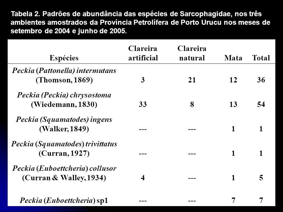 Espécies Clareira artificial Clareira naturalMataTotal Peckia (Pattonella) intermutans (Thomson, 1869)3211236 Peckia (Peckia) chrysostoma (Wiedemann,