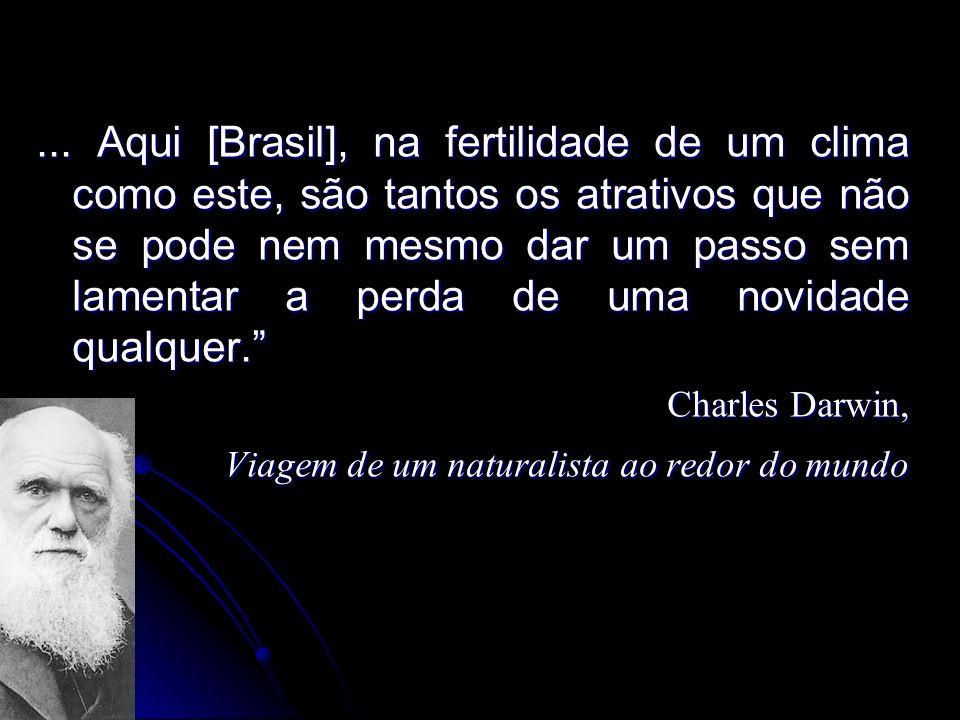 ... Aqui [Brasil], na fertilidade de um clima como este, são tantos os atrativos que não se pode nem mesmo dar um passo sem lamentar a perda de uma no