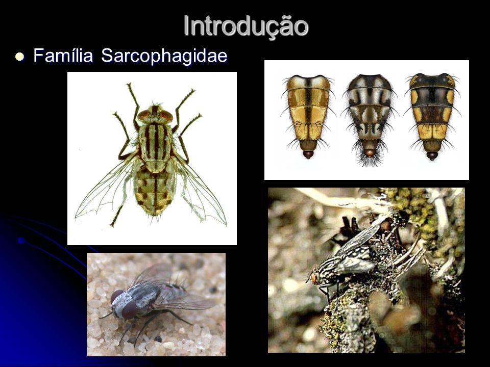 EspécieFêmeasMachosTotal Nephochaetopteryx pallidiventris1(100%)01 Peckia (Euboettcheria) collusor5(100%)05 Peckia (Euboettcheria) sp1 0 7 (100%)7 Peckia (Squamatodes) ingens01(100%)1 Peckia (Peckia) chrysostoma42(77,7%)12(22,3%)54 Peckia (Pattonella) intermutans36(100%)036 Peckia (Squamatodes) trivittatus01(100%)1 Sarcodexia lambens94(81%)22(19%)116 Helicobia sp13(100%)03 Tabela 3.