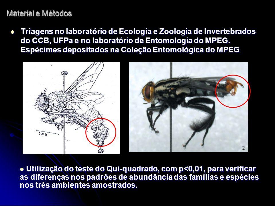 Triagens no laboratório de Ecologia e Zoologia de Invertebrados do CCB, UFPa e no laboratório de Entomologia do MPEG. Espécimes depositados na Coleção