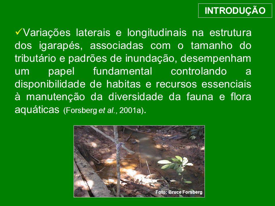Variações laterais e longitudinais na estrutura dos igarapés, associadas com o tamanho do tributário e padrões de inundação, desempenham um papel fund