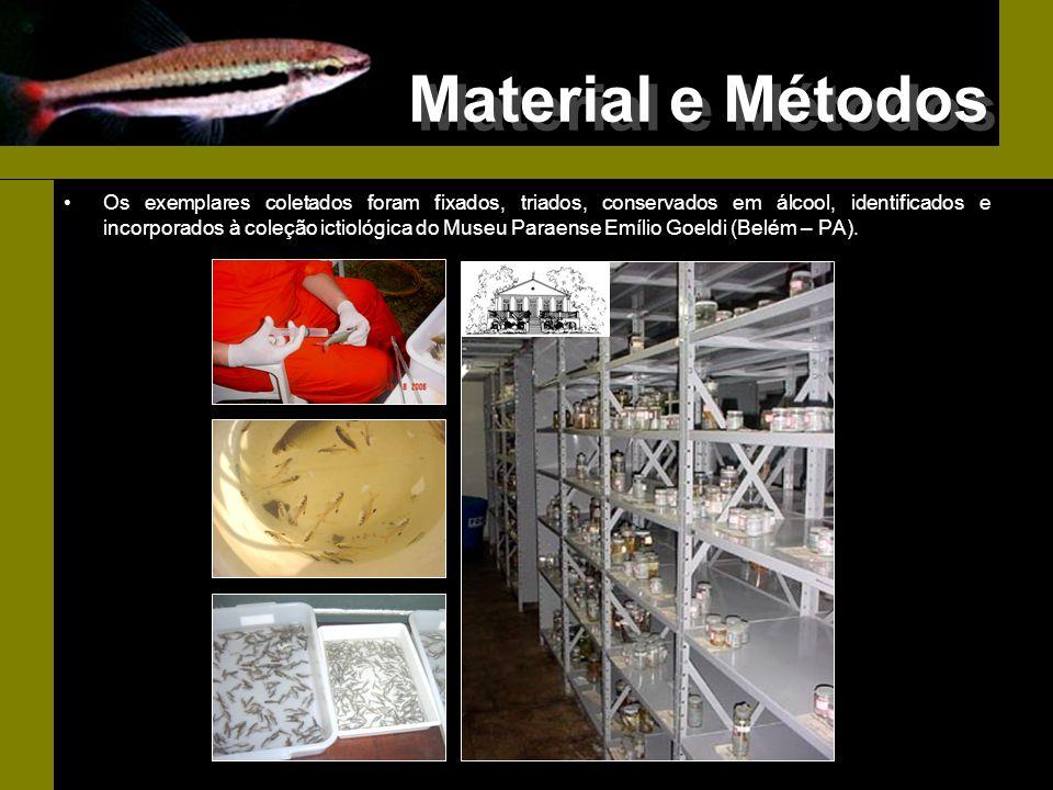 Material e Métodos Os exemplares coletados foram fixados, triados, conservados em álcool, identificados e incorporados à coleção ictiológica do Museu
