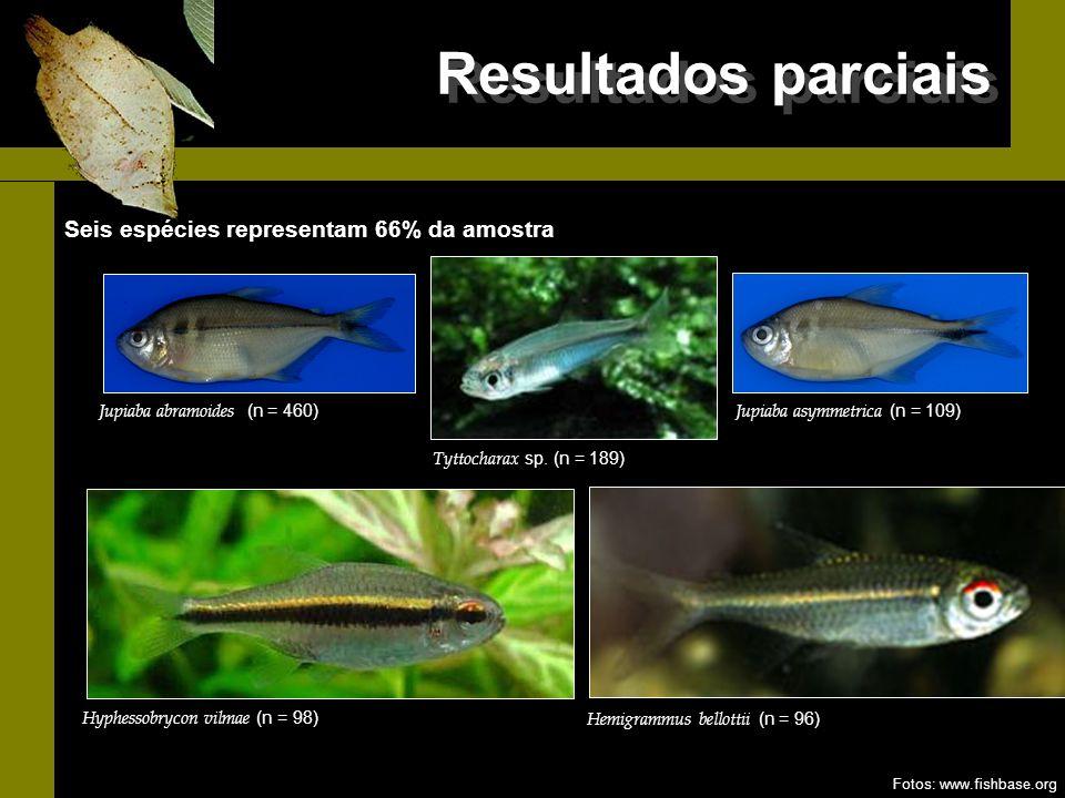 Resultados parciais Tyttocharax sp. (n = 189) Hyphessobrycon vilmae (n = 98) Hemigrammus bellottii (n = 96) Jupiaba abramoides (n = 460) Jupiaba asymm