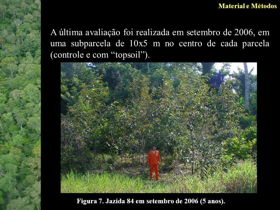 Material e Métodos Figura 7.Jazida 84 em setembro de 2006 (5 anos).