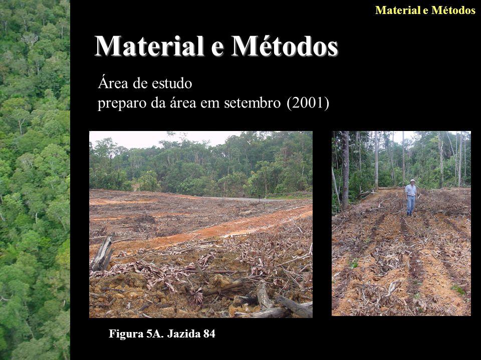 Material e Métodos Área de estudo preparo da área em setembro (2001) Material e Métodos Figura 5A.