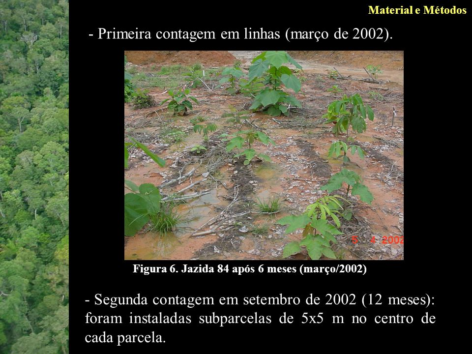 Material e Métodos - Segunda contagem em setembro de 2002 (12 meses): foram instaladas subparcelas de 5x5 m no centro de cada parcela.