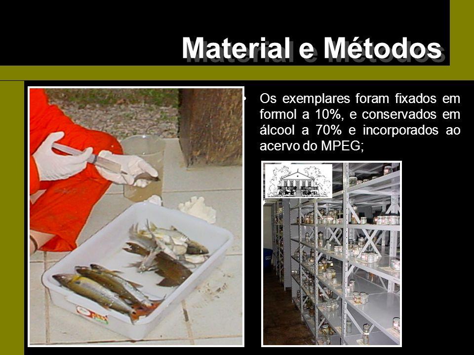 Os exemplares foram fixados em formol a 10%, e conservados em álcool a 70% e incorporados ao acervo do MPEG; Material e Métodos