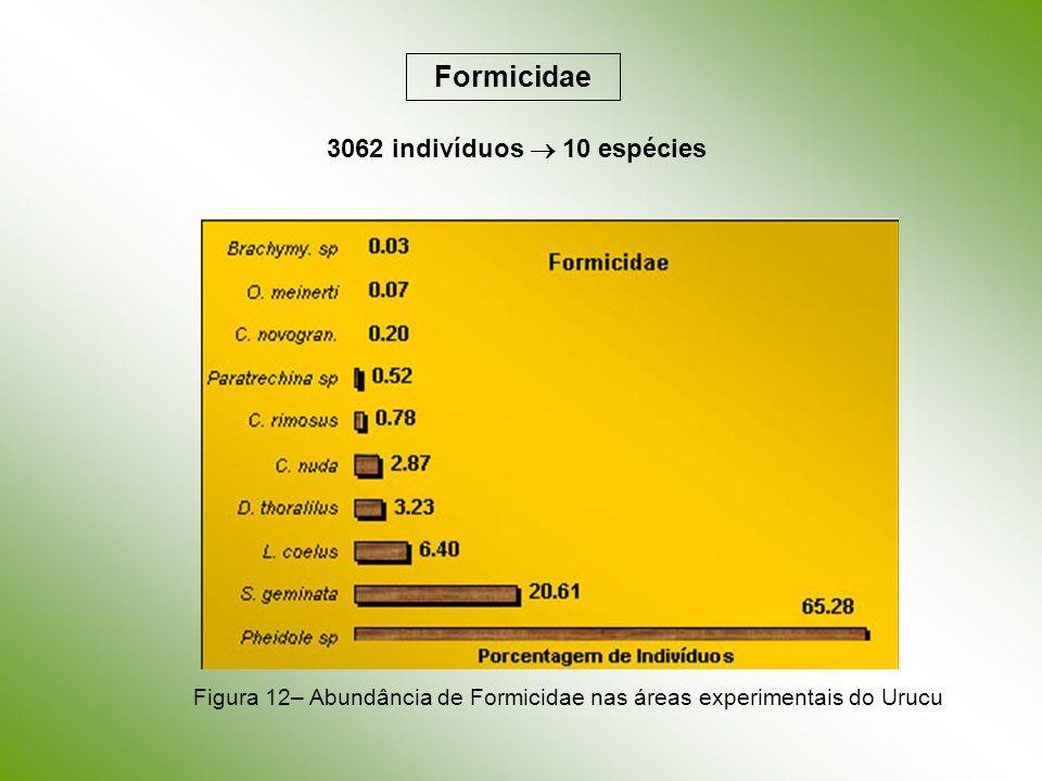 Formicidae 3062 indivíduos 10 espécies Figura 12– Abundância de Formicidae nas áreas experimentais do Urucu